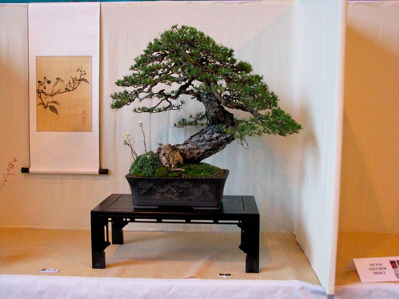 DONZAC (82) 19 et 20 mai 2012 exposition regionale de bonsai Img_0083