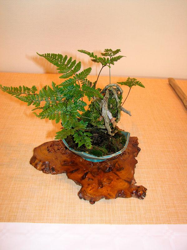 DONZAC (82) 19 et 20 mai 2012 exposition regionale de bonsai Img_0084