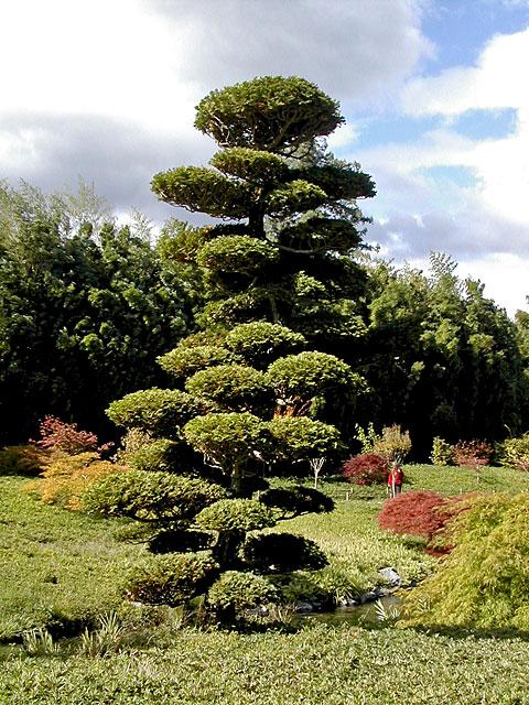 bambouseraie anduze Pin510
