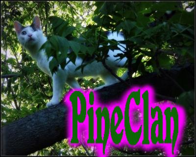 Alliances  Pinecl10