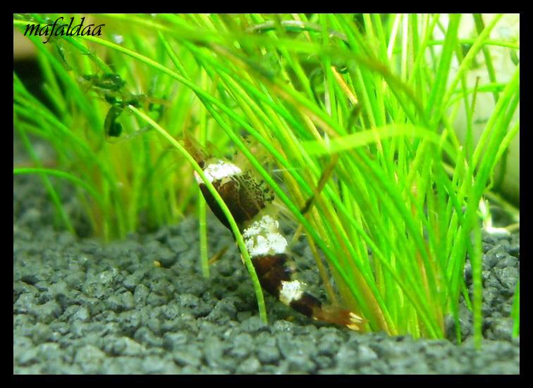 Mes crevettes adorées (vos avis sont les bienvenus) - Page 2 2012-018