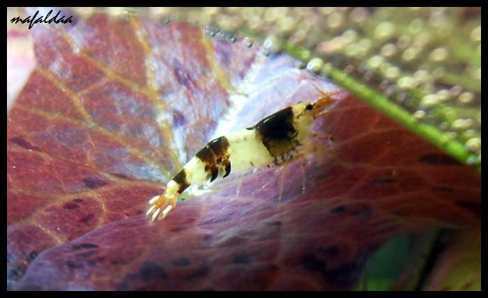 Mes crevettes adorées (vos avis sont les bienvenus) - Page 2 2012-033