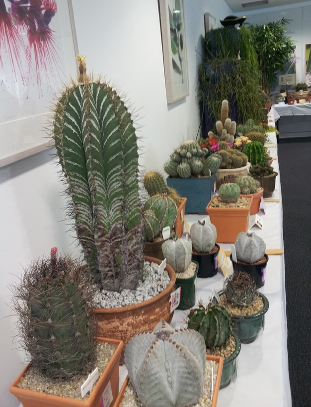 New South Wales Cacti & Succulent Spring Show Astrop10