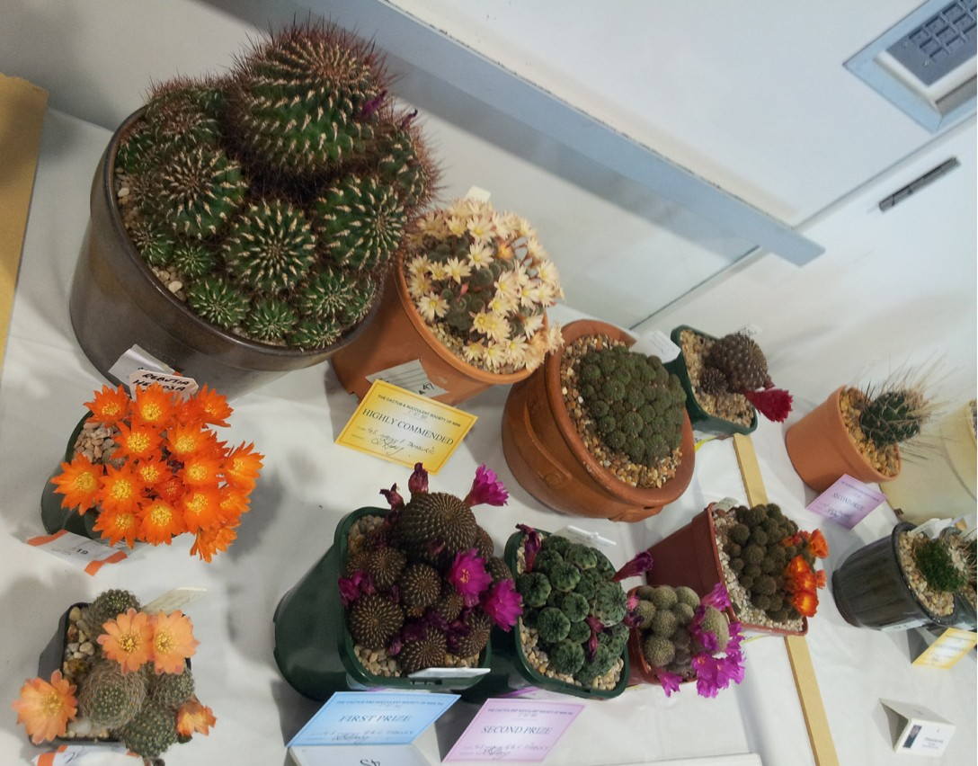 New South Wales Cacti & Succulent Spring Show Flower10