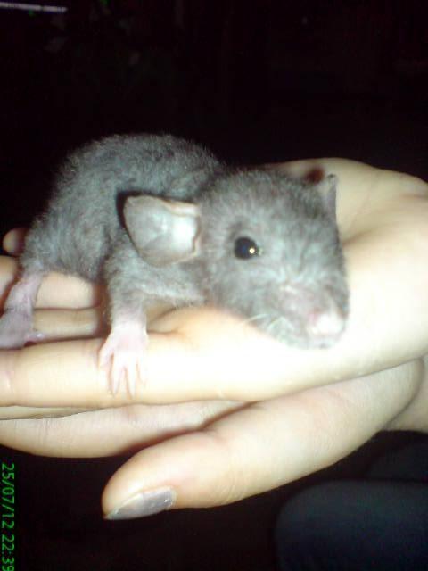 Rat nu ou non  Img_0511