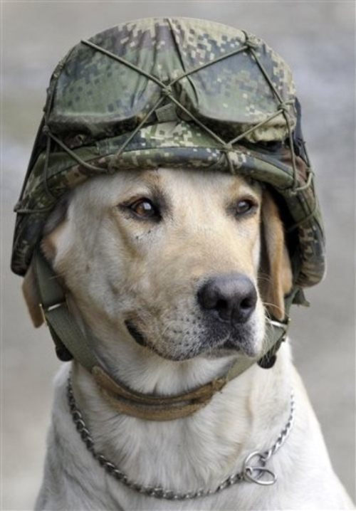 Animaux soldats - Page 2 Random39