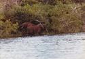 conseils pour un éléphant Imp_0010