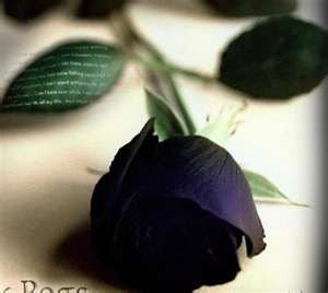 Le monde végétal, la spiritualité et la couleur verte Rose_d11