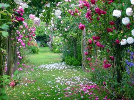 les fleurs et la spiritualité Rose_d13