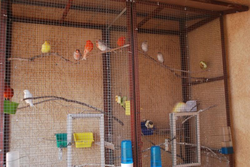 Présentation de mes oiseaux Dsc_1636
