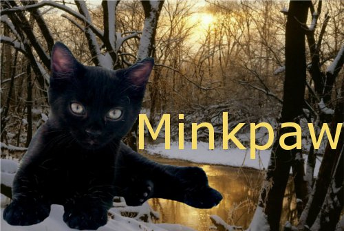 Cat Pictures Minkpa10