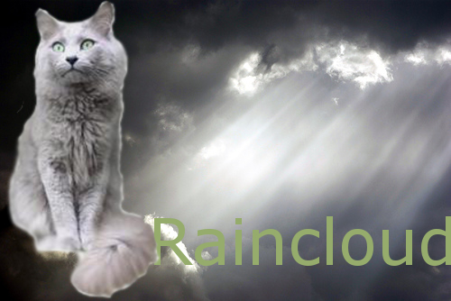 Cat Pictures Raincl15