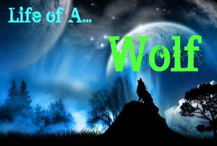 Live the life of a wolf.
