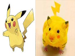 Diviertete Un Poco Viendo Pokemons En La Vida Real... Pikach10