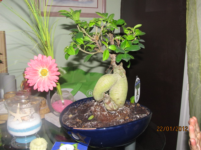 probleme bonsai Bonsai12