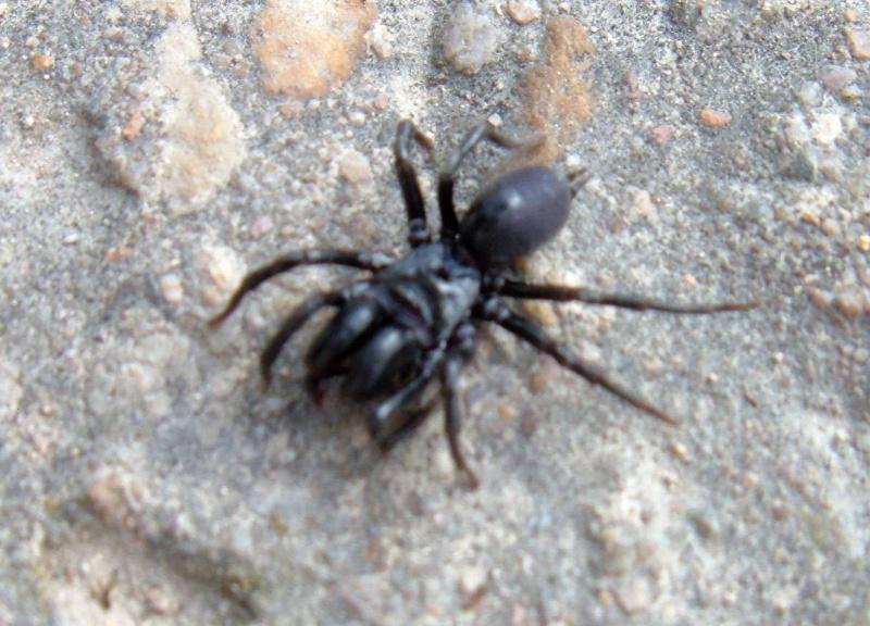 Araignée agressive ou myope ? Araign14