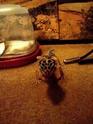 new gecko activity 02221211