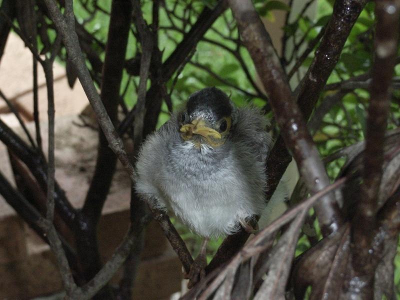 Birds in my Aussie garden R4005115