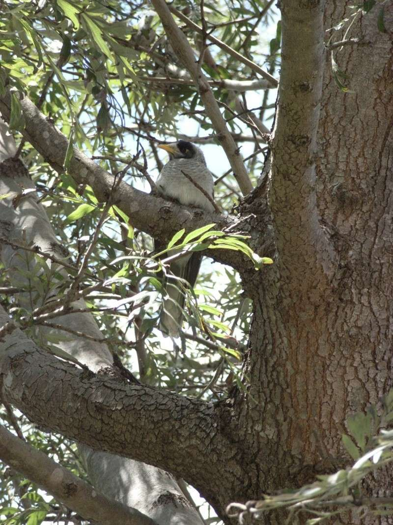 Birds in my Aussie garden R4005210