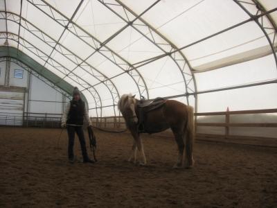 Julius, mon cheval Img_3711