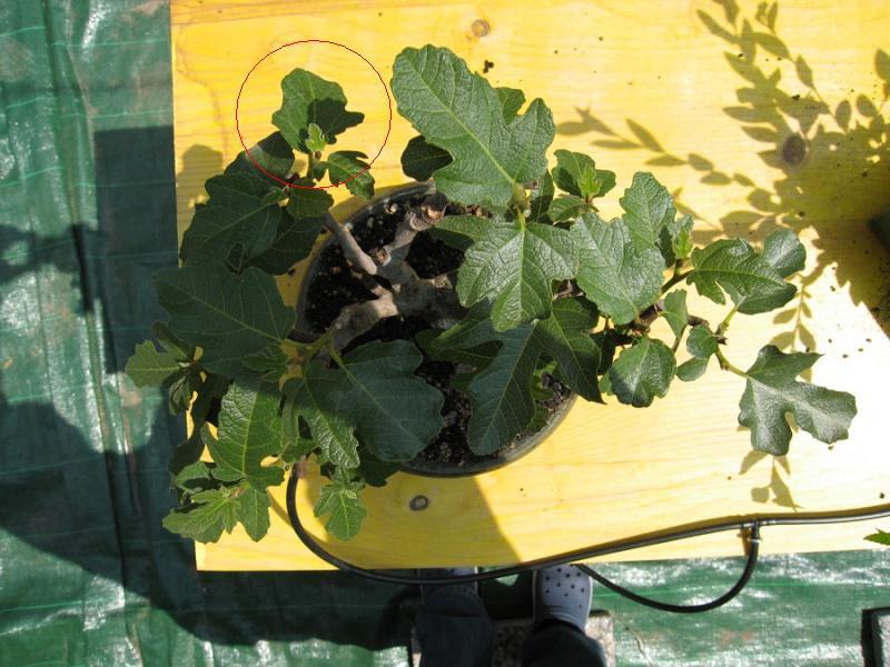 invio immagini piante tirate su da terra - Pagina 3 Img_2110