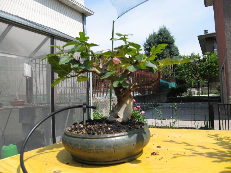 invio immagini piante tirate su da terra - Pagina 3 Img_2111