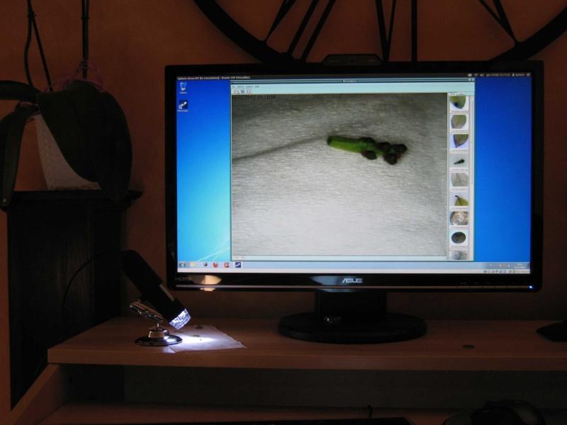 Microscopio USB Img_3413