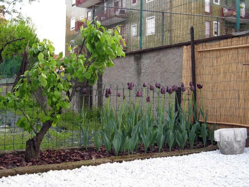 X-Garden (il giardino mutante) - Pagina 4 Img_3713