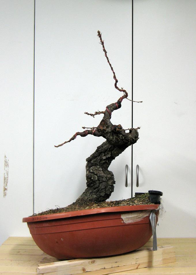 Quercus cerris - Pagina 3 Img_4616