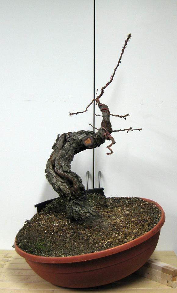 Quercus cerris - Pagina 3 Img_4617