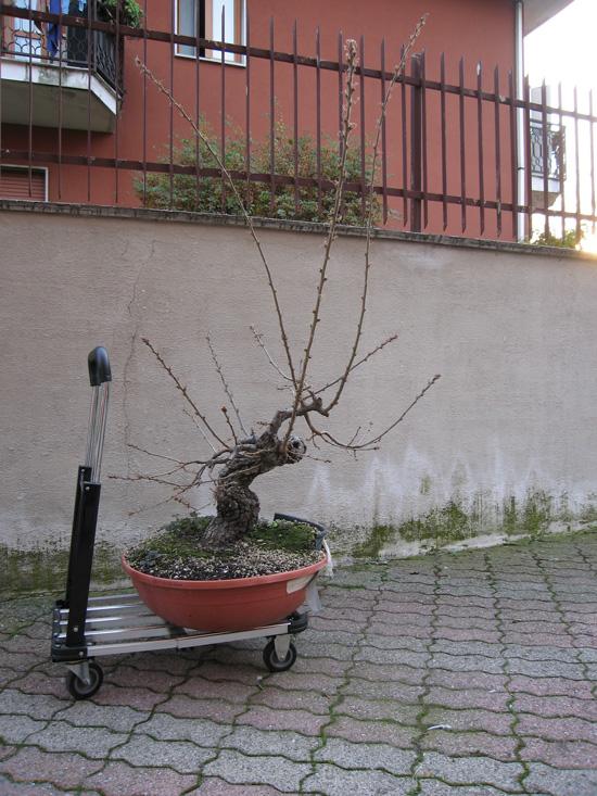 Quercus cerris - Pagina 3 Img_4618