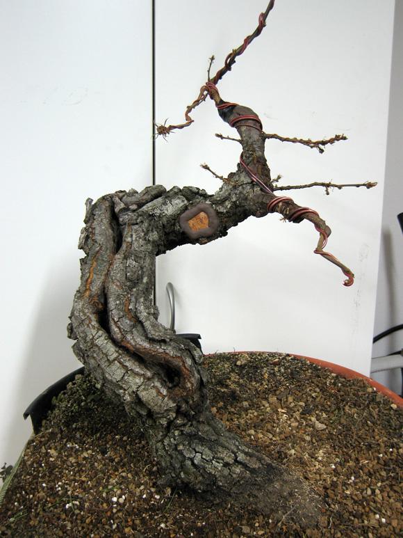 Quercus cerris - Pagina 3 Img_4619