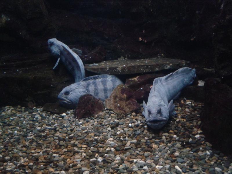 Oceanopolis Brest 2012 2012-021