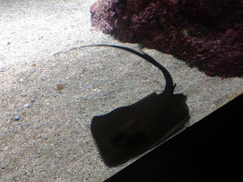 Oceanopolis Brest 2012 2012-024