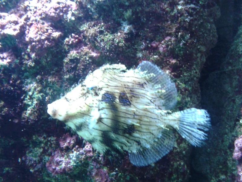 Oceanopolis Brest 2012 2012-030