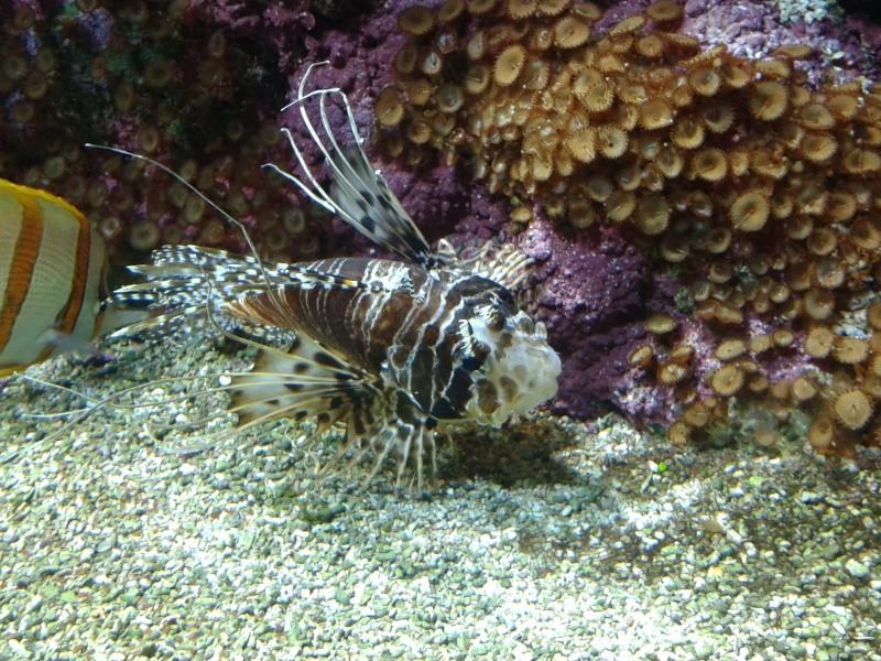 Oceanopolis Brest 2012 2012-031