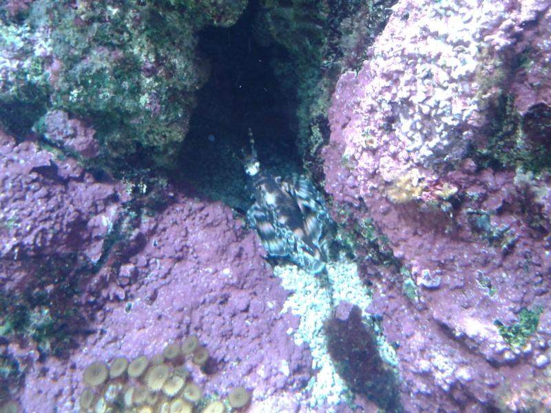Oceanopolis Brest 2012 2012-032