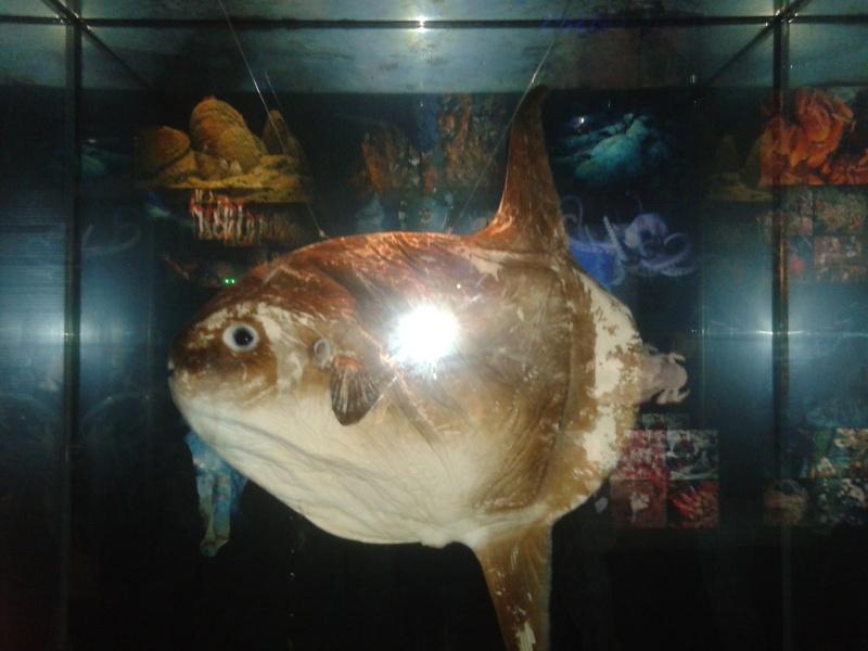 Oceanopolis Brest 2012 2012-039