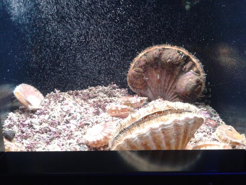 Oceanopolis Brest 2012 2012-048