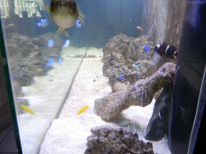 Aquarium FO Dscn0126