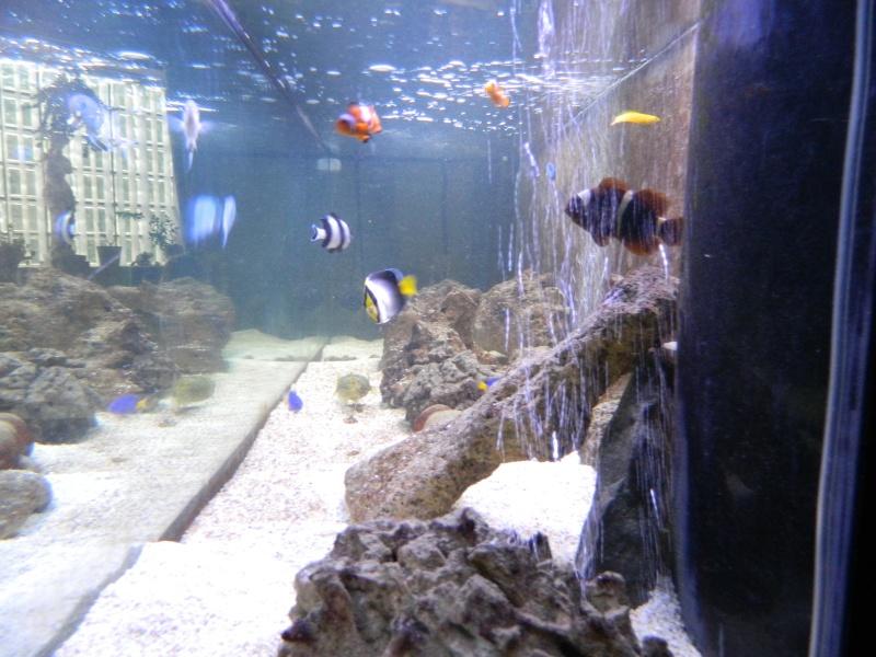 Aquarium FO Dscn0127