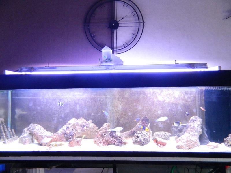 Aquarium FO Dscn0128