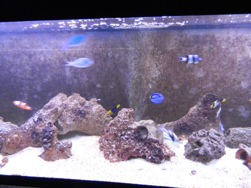 Aquarium FO Dscn0129