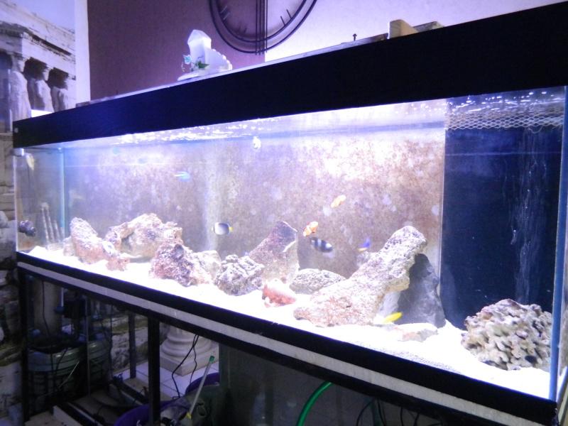 Aquarium FO Dscn0130