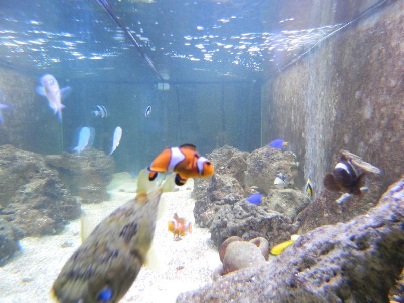 Aquarium FO Dscn0131