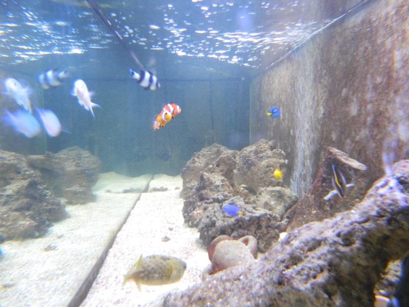 Aquarium FO Dscn0132
