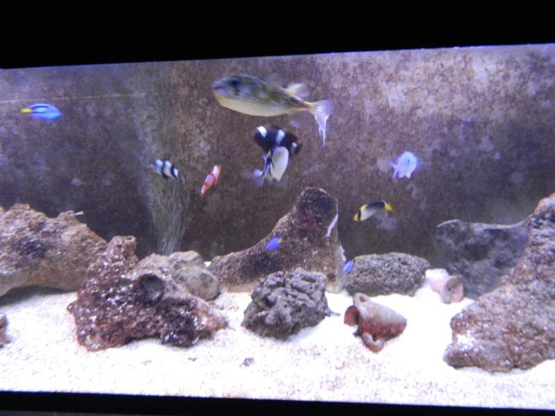 Aquarium FO Dscn0215