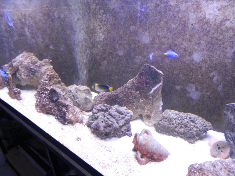 Aquarium FO Dscn0216