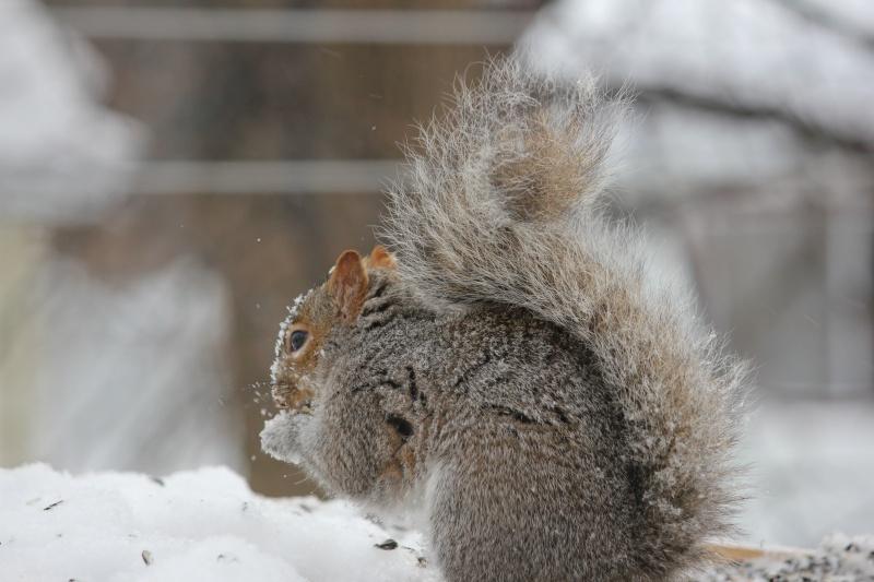 Écureuils Img_0111