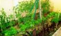 Mon petit jardin secret :D - Page 2 Imag0112